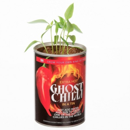Grow Your Own Ghost Chilli